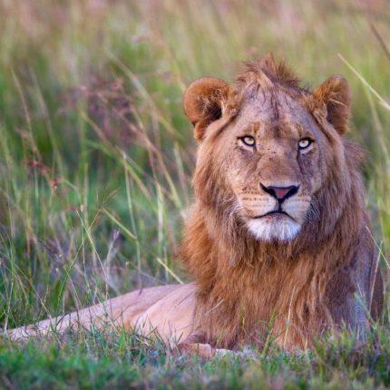 safaris en africa, Safari en kruger