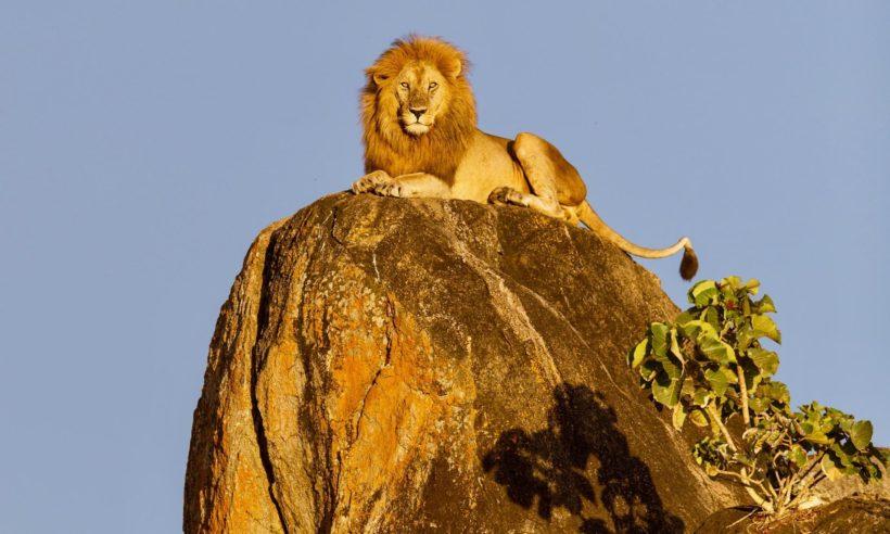 safaris en africa, Safari en el corazón de Tanzania