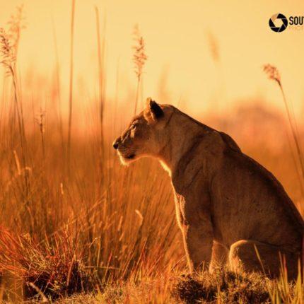 safaris en africa, Botswana Explorer Safari Fotográfico
