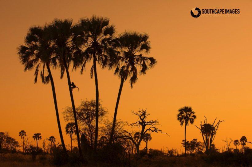 BOTSWANA EXPLORER SAFARI FOTOGRÁFICO CON MARIO MORENO (4)