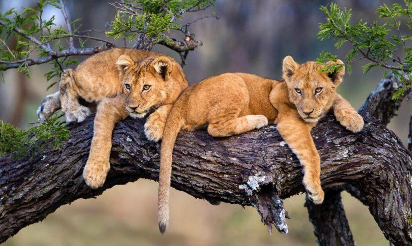 safaris en africa, Safari Fotográfico La Gran Migración