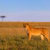 safaris en africa, Safari fotográfico Masai Mara