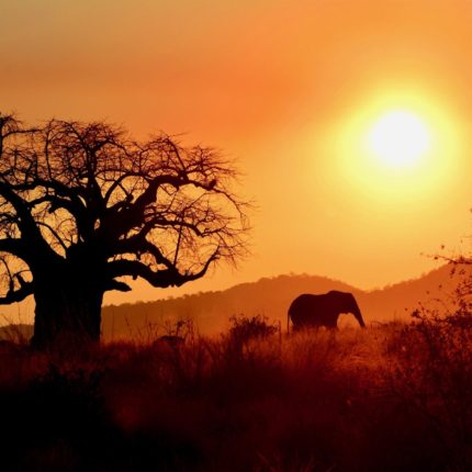 safaris en africa