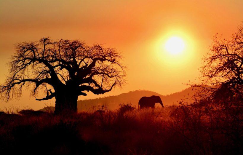 –OFERTA LAST MINUTE– SAFARI DE 3 DÍAS EN RUAHA, TANZANIA