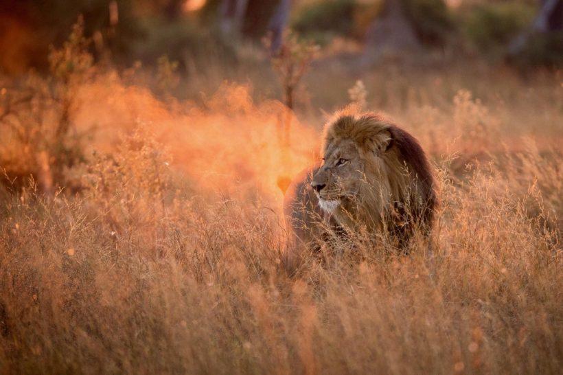 safari SERENGETI & NGORONGORO