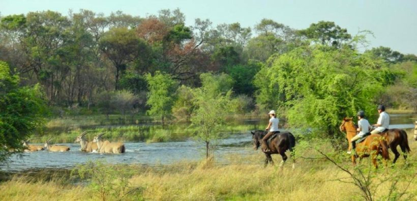 SAFARI A CABALLO OKAVANGO & THAMALAKANE RIVER ADVENTURE (3)