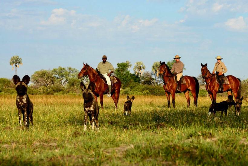 Safari-a-Caballo-Okavango