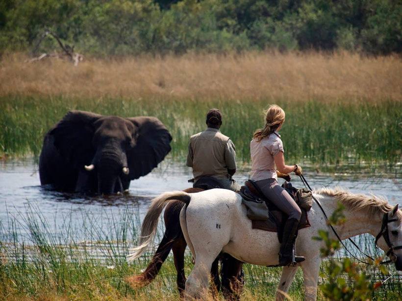 Safari-a-Caballo-Okavango-en-Fly-Camps