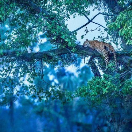 tanzania los parques del sur