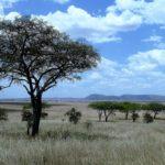 safaris en africa Safaris a africa africae travel