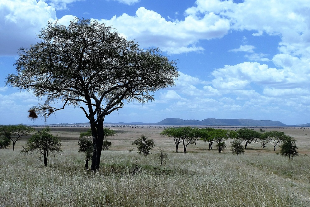 Safaris a africa africae travel