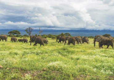 Safari de 3 Días en Ruaha, safaris en africa Viajar a Tanzania: trucos y consejos