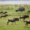 safaris salidas 2019, Safari tanzania