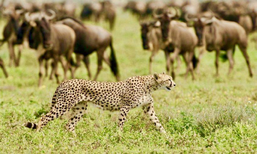 Safari en Tanzania Semana Santa