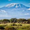 Kilimanjaro-Safari-a-caballo-10