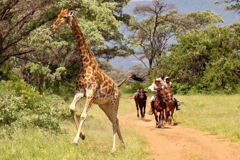 SAFARI A CABALLO EN SUDÁFRICA Y PLAYAS DE MOZAMBIQUE