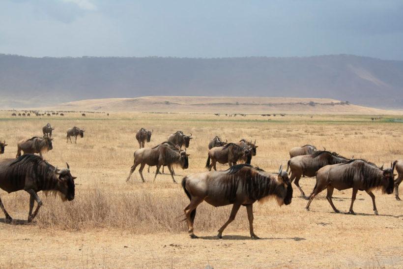 safari-Masai-Mara-2