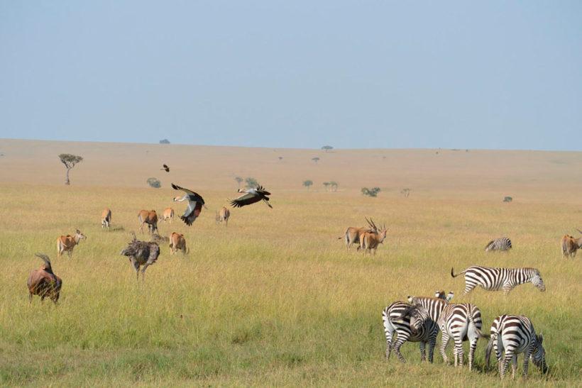 safari-Masai-Mara-3