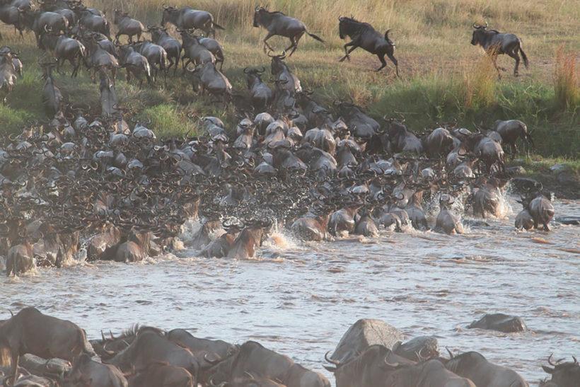 safari-Masai-Mara-4