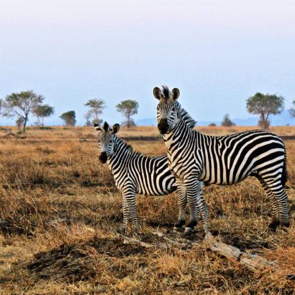 Safari Tanzania Secreta